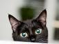 Les soins et l'entretien du chat âgé