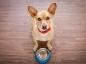 Les conseils pour bien nourrir son chien