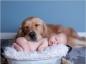Habituer votre chien à la présence de votre nouveau-né