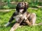 Les symptômes et les traitements de la gale chez le chien