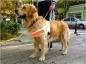 « J'ai élevé un chien guide d'aveugles »