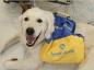 Les chiens d'assistance Handi'Chiens pour les personnes à mobilité réduite