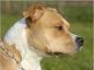 Les obligations légales si vous avez un chien dit dangereux