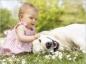 Bien gérer l'arrivée de bébé pour une bonne relation avec l'animal de la maison