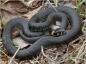 Accueil Reptiles