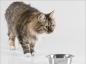 Une nouvelle alimentation pour les chats arthrosiques