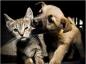 Les mesures préventives pour éviter les puces et les allergies chez le chat et le chien