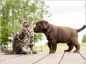 Repérer et soigner les dermatoses chez le chat et le chien