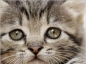 Les types d'ecoulements oculaires fréquents chez le chat et le chien