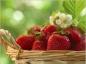 L'apport nutritionnel de la fraise