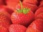 Connaissez-vous les antioxydants ?