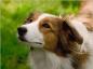 Hygiène et soins des oreilles du chien