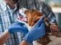 Les bons gestes contre l'intoxication des chiens à la mort aux rats