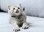Comment choisir et entretenir la litière de votre chat ?