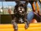 Eviter et soigner le mal des transports chez le chien