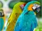 L'alimentation des perroquets et des perruches
