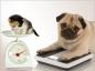 L'obésité chez le chien et le chat