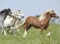 Comment éliminer les vers chez le cheval ?
