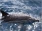 Des dauphins pour améliorer le bien-être d'enfants souffrant de troubles relationnels