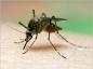 Comment éviter les piqûres de moustiques ?