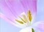 Prévention et traitement de la rhinite allergique