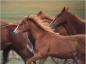 Les risques du tétanos chez le cheval