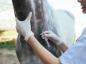 Les vaccins du cheval
