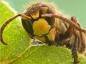 Déceler une réaction allegique à une piqûre d'insecte