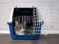 La réglementation pour les animaux de compagnie en voyage
