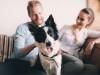 Traiter son chien contre les parasites