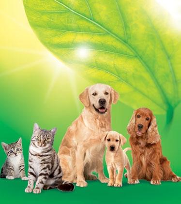 Gamme vétérinaire VETO'XPERT